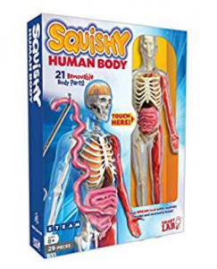 6. SmartLab Squishy Human Body