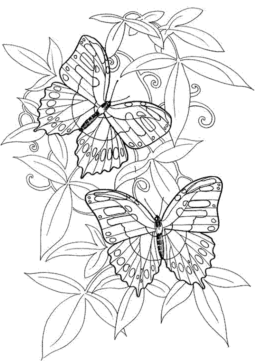 Butterfly coloring pages for adults for Coloring pages of butterflies for adults