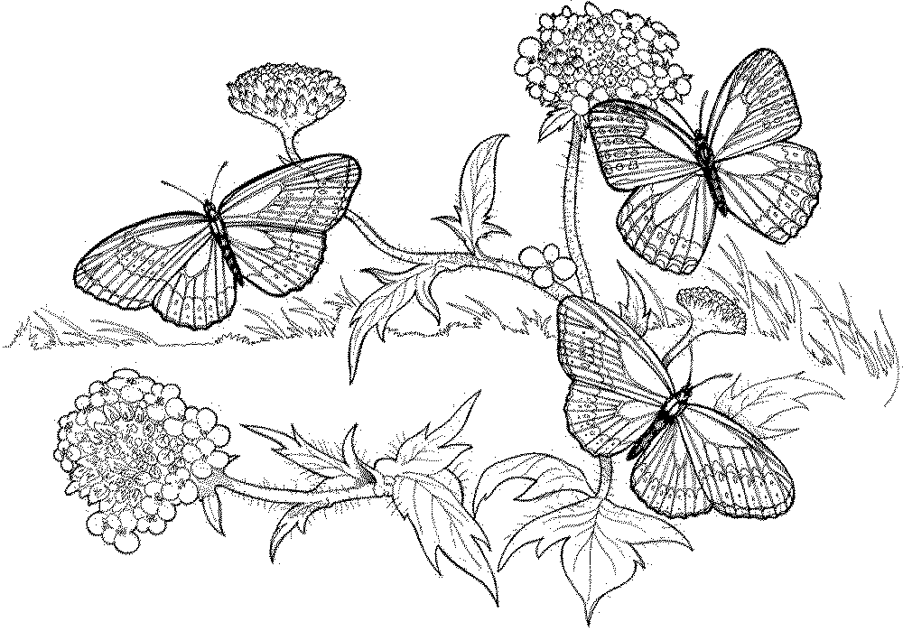 Autumn Coloring Pages For Adults Autumn Coloring Sheets  Commonpence.co