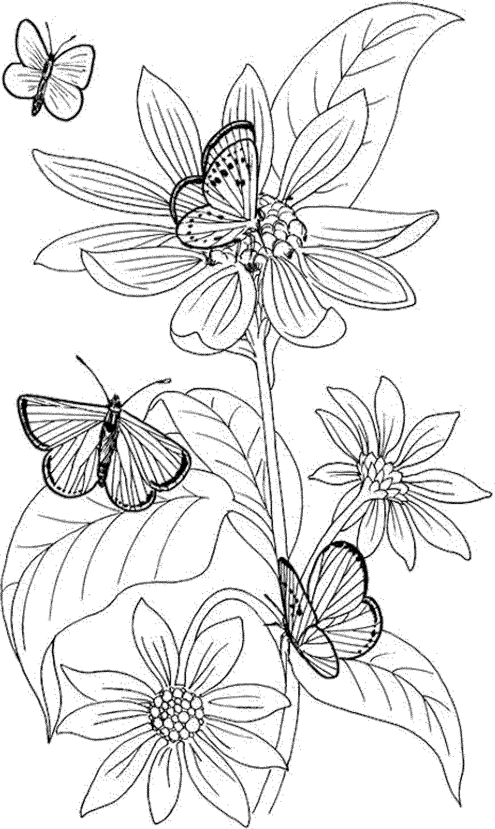 Free coloring pages printable for adults - Check
