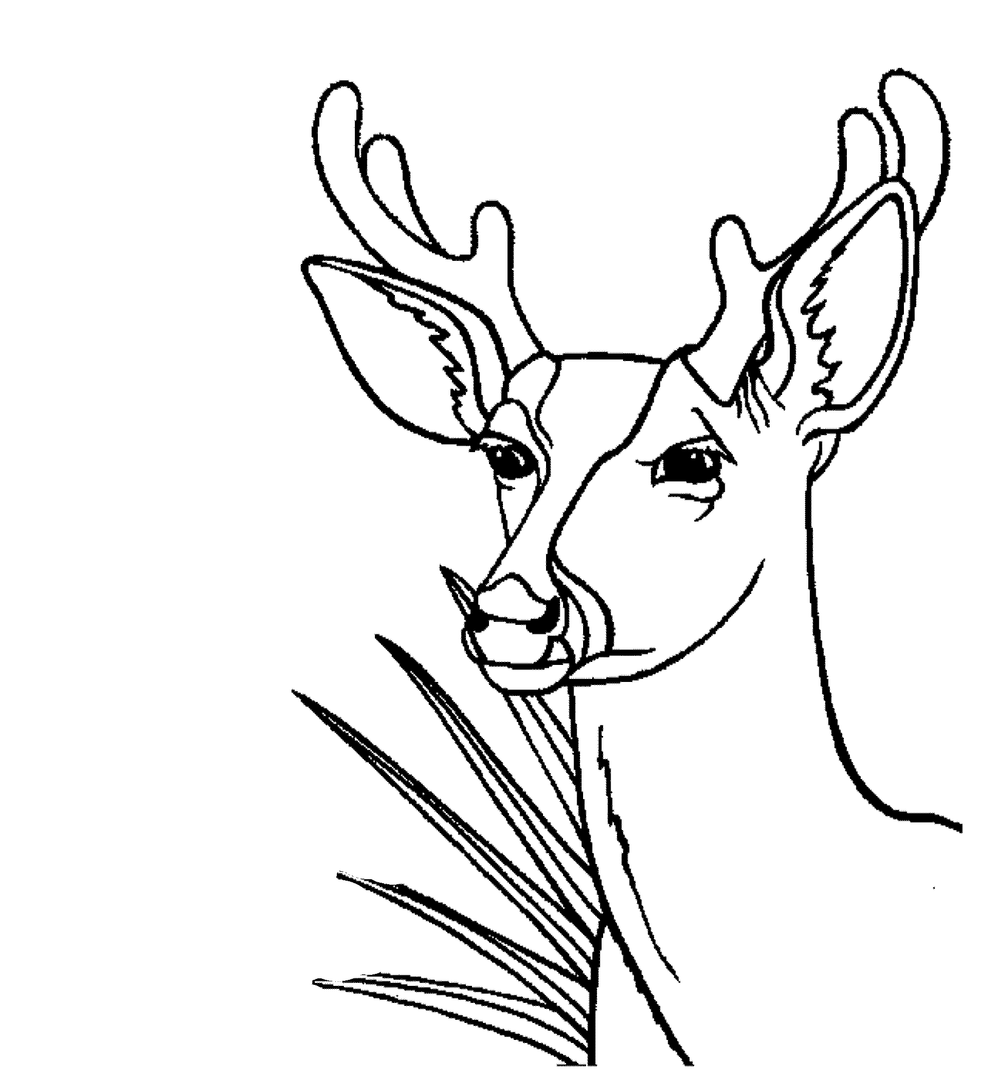 Coloring Page Stag Head - free printable coloring pages | 2169x2000