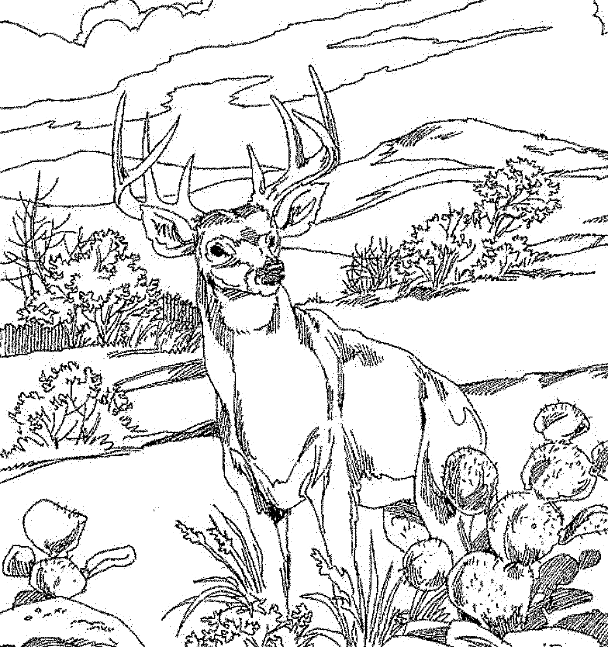 Adult Coloring Pages Images, Stock Photos & Vectors | Shutterstock | 2128x2000