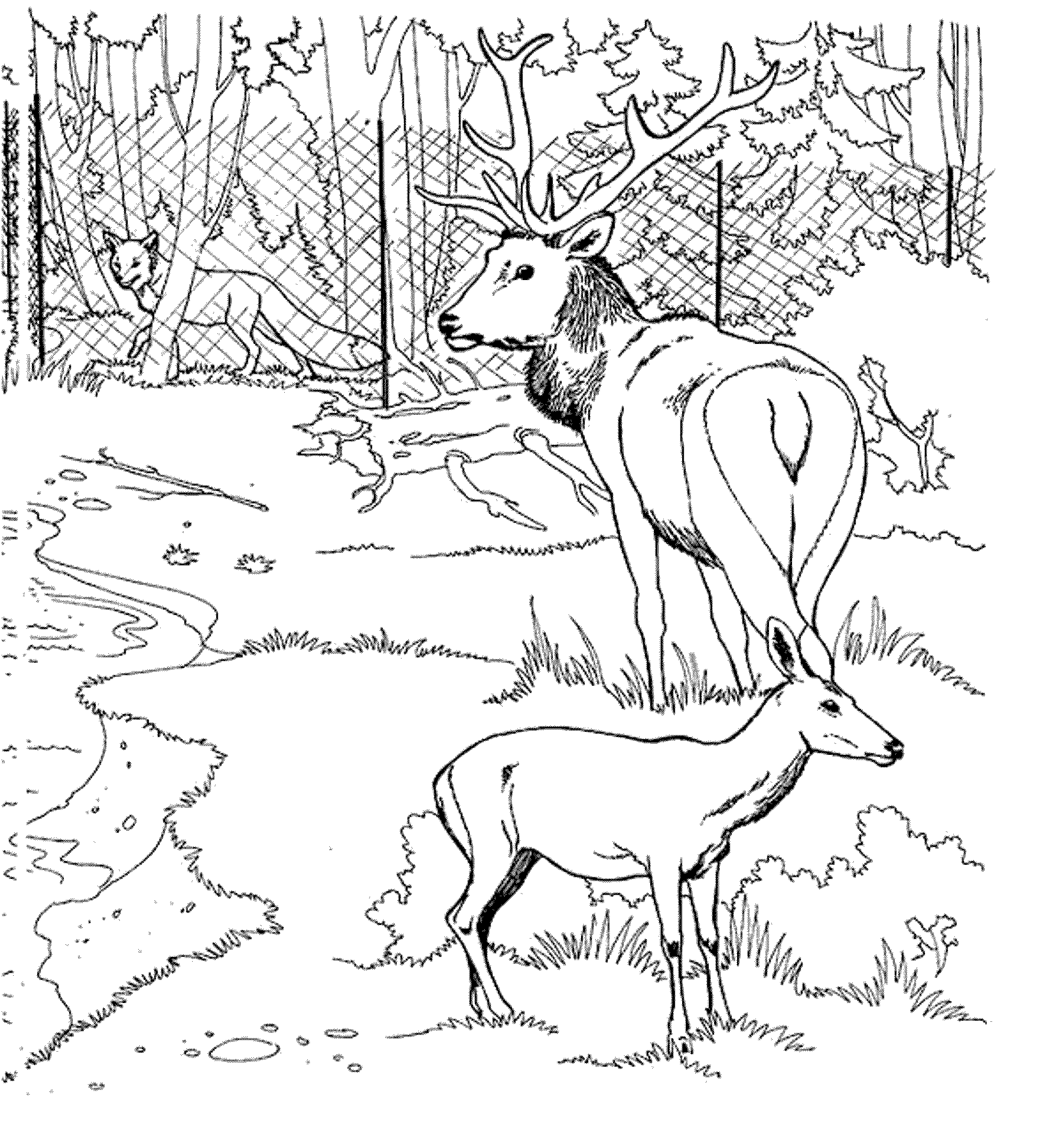coloring-pages-deer | | BestAppsForKids.com