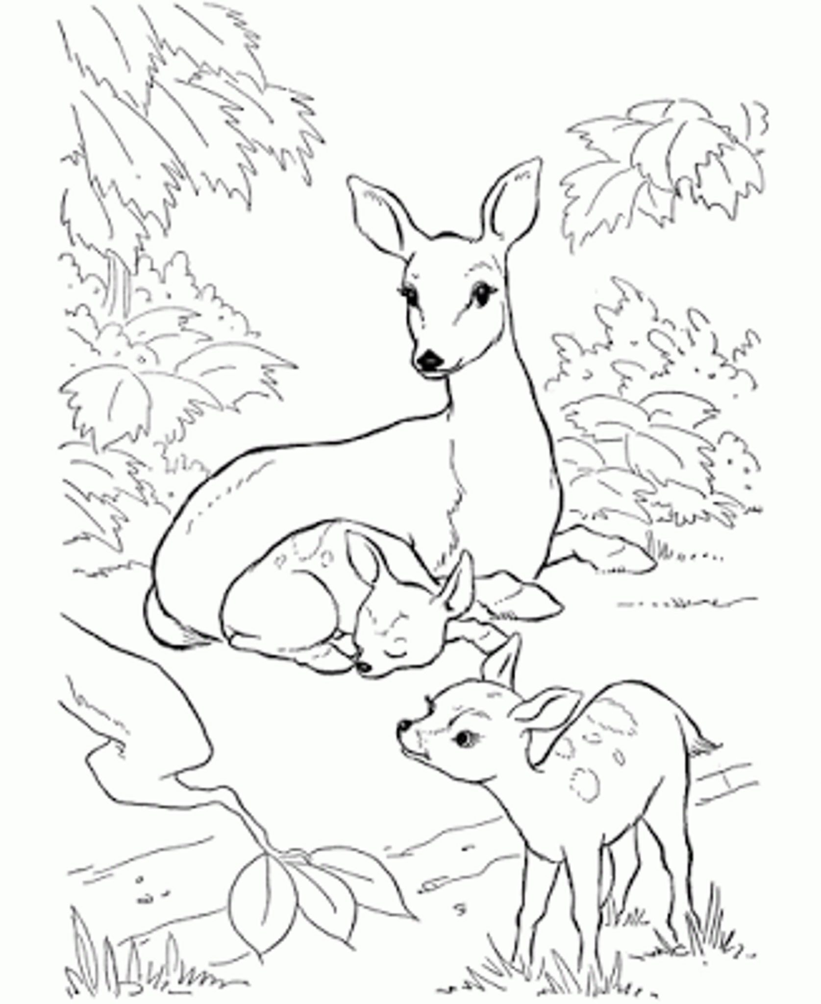 coloring pages of deer BestAppsForKidscom