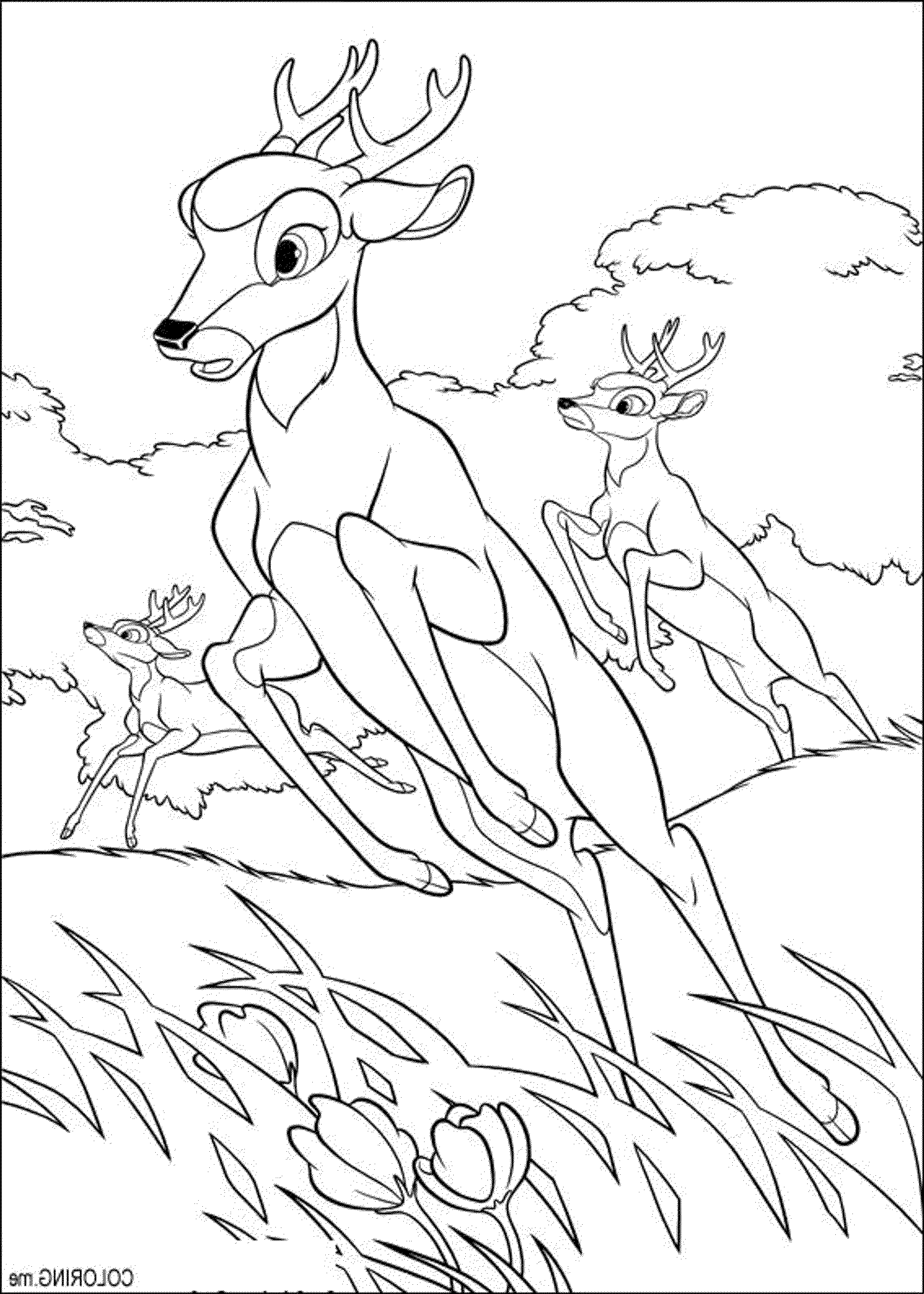 deer-hunting-coloring-pages | | BestAppsForKids.com