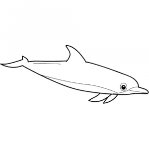 print  download  my experience of making dolphin