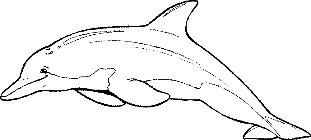 Print & Download - My Experience of Making Dolphin Coloring Pages -