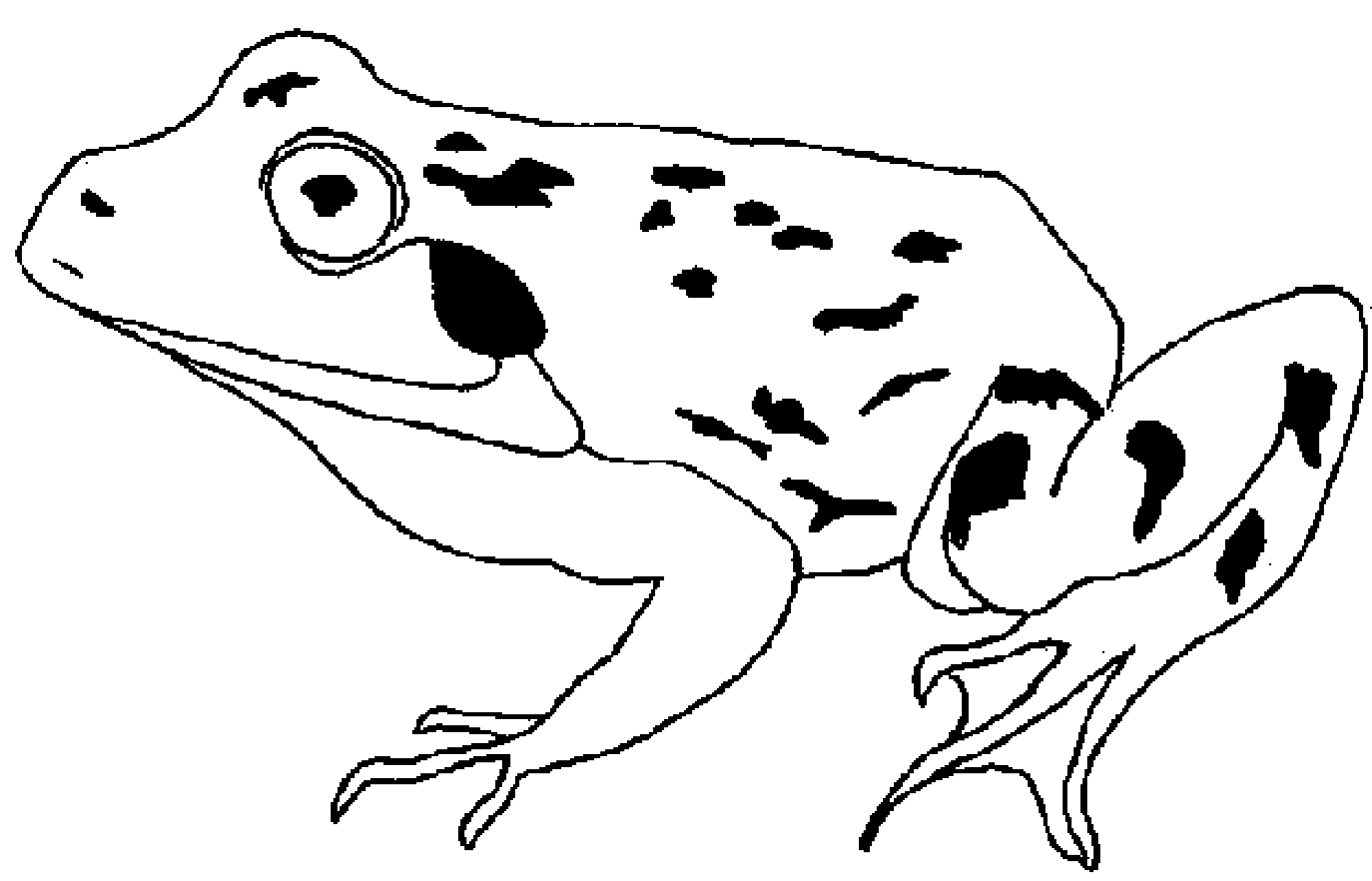 Frog Toad Coloring Pages Murderthestout