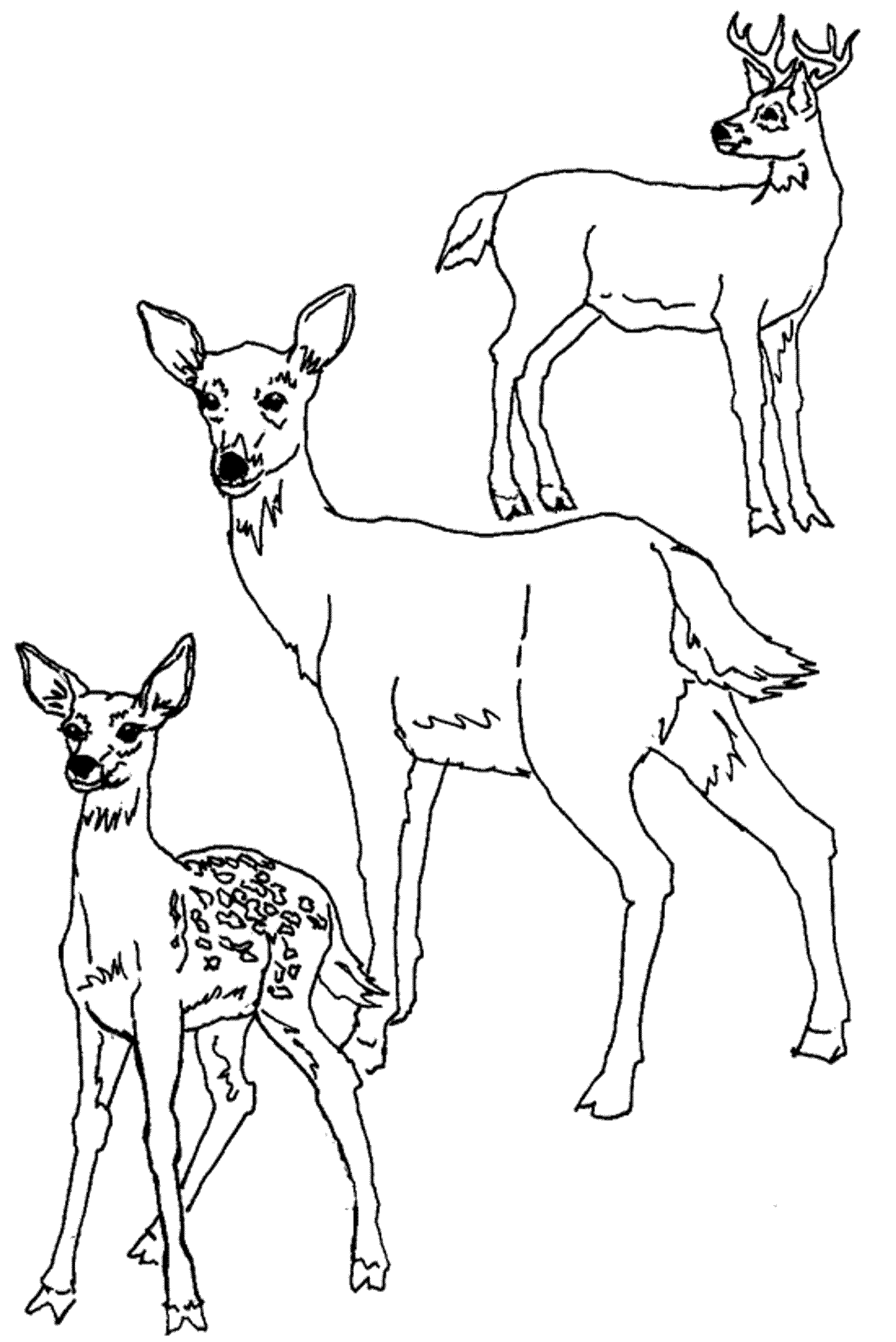 Print download deer coloring pages for totally for Mom and baby coloring pages