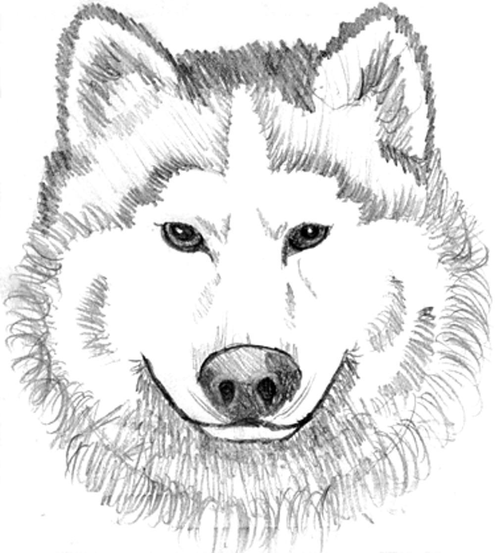 printable realistic head wolf coloring pages - Wolf Coloring Pages