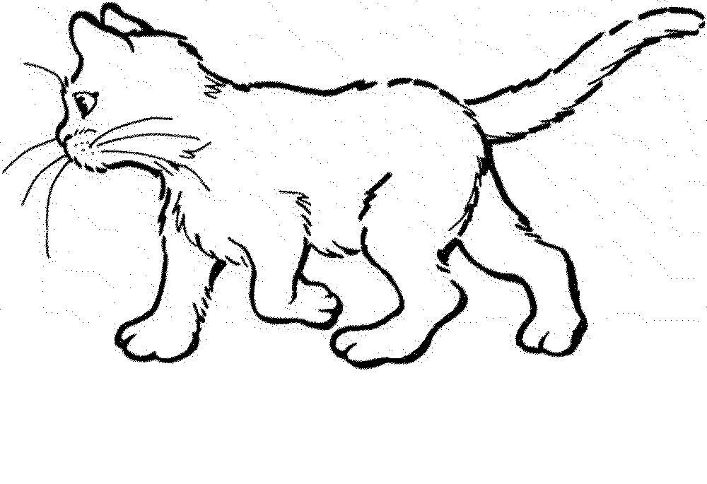 Gallery Of The Benefit Cat Coloring Pages