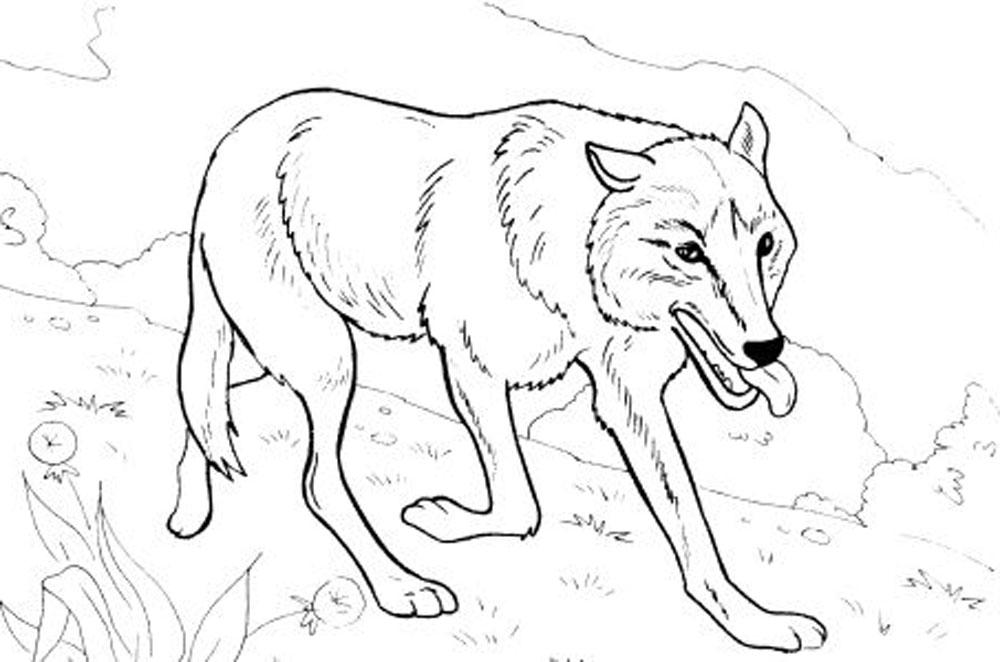 coloring pages wolves - photo#43