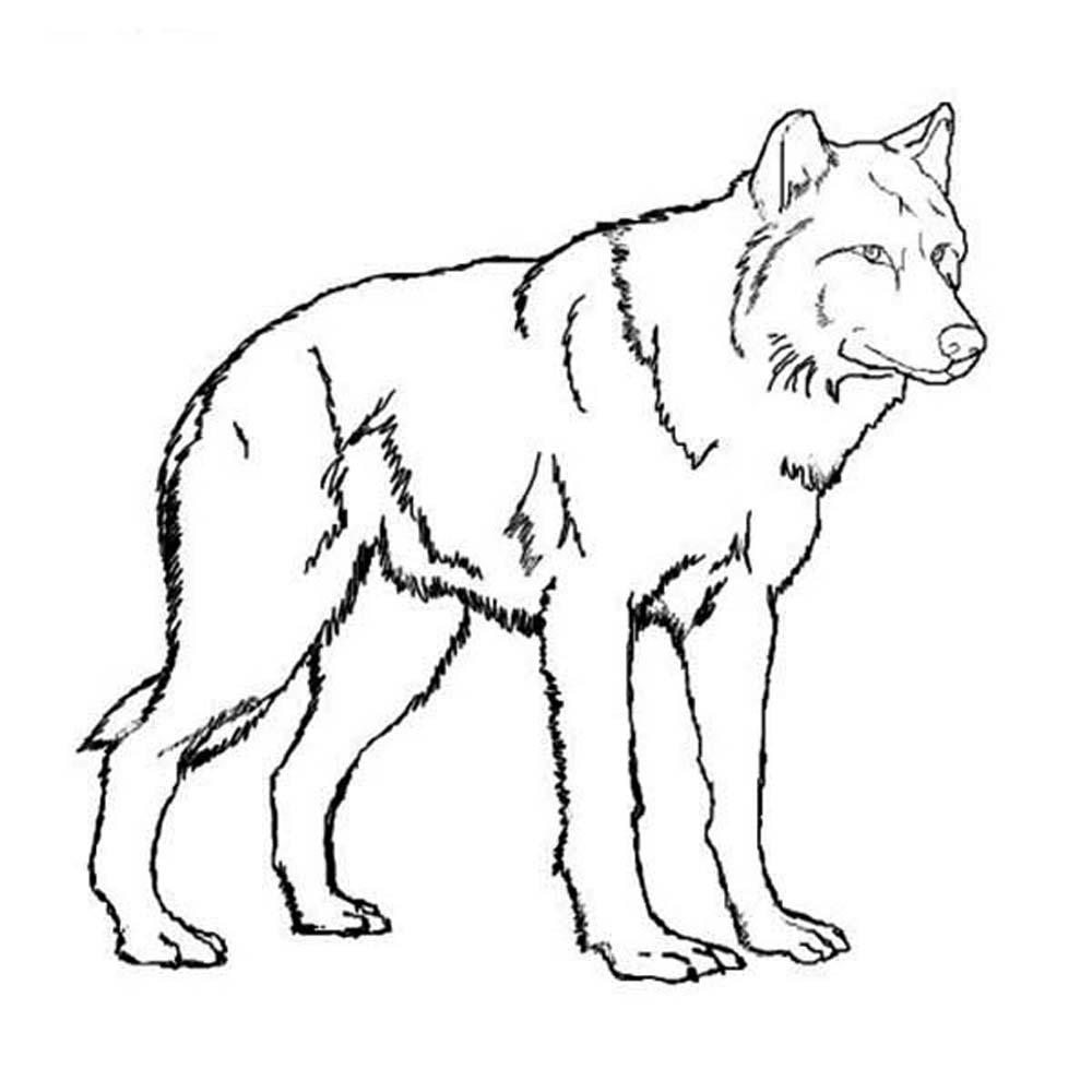 realistic wolf coloring pages - Realistic Werewolf Coloring Pages