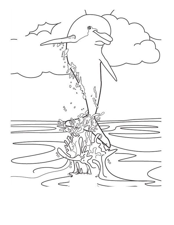 spinnerdolphincoloringpage