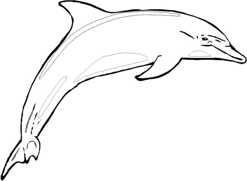 Winter The Dolphin Coloring Pages Bestappsforkids Com