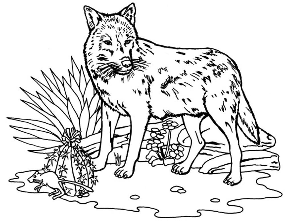 coloring pages wolves - photo#14