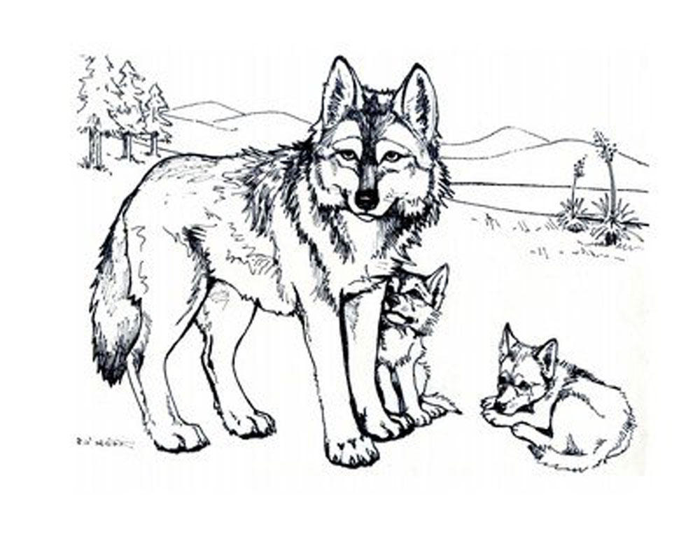 coloring pages wolves - photo#13