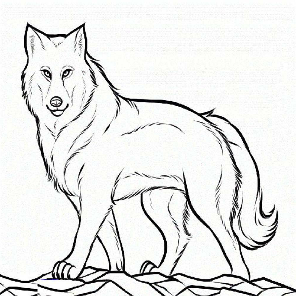 wolf pup coloring pages - Wolf Coloring Pages