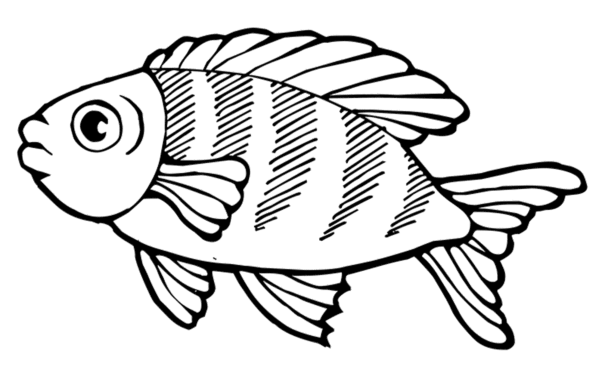 pictures of fish to color - Gidiye.redformapolitica.co