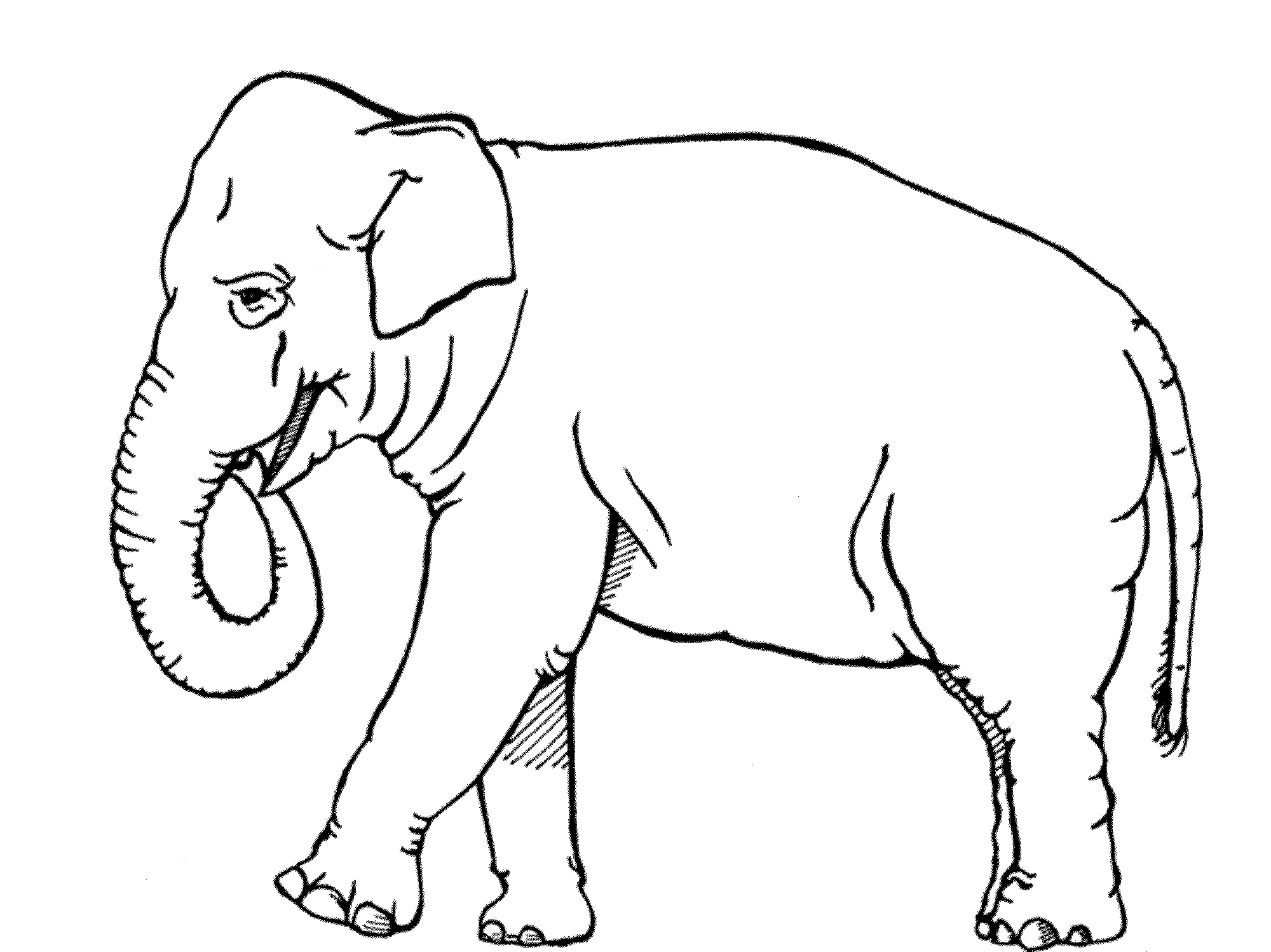 Coloring pages elephant for Elephant coloring pages