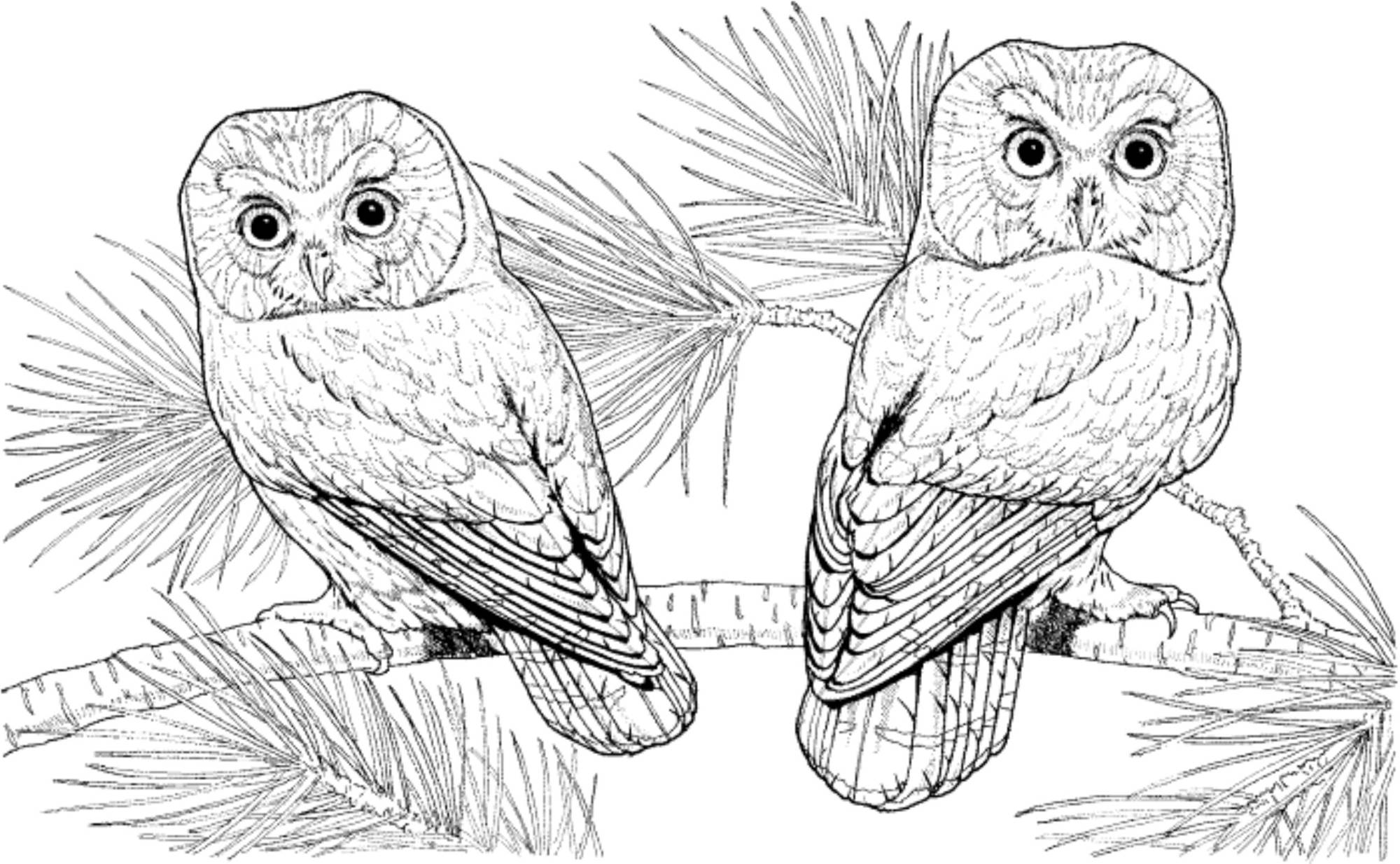 Print & Download - Owl Coloring Pages for Your Kids