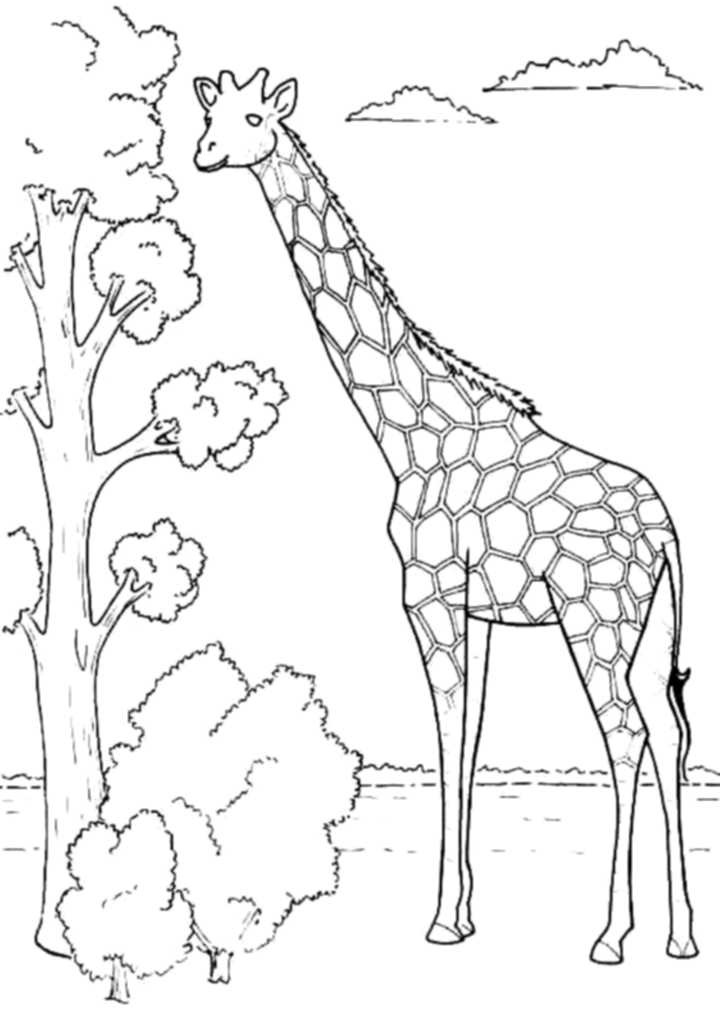 coloring pages of girafes - photo#26
