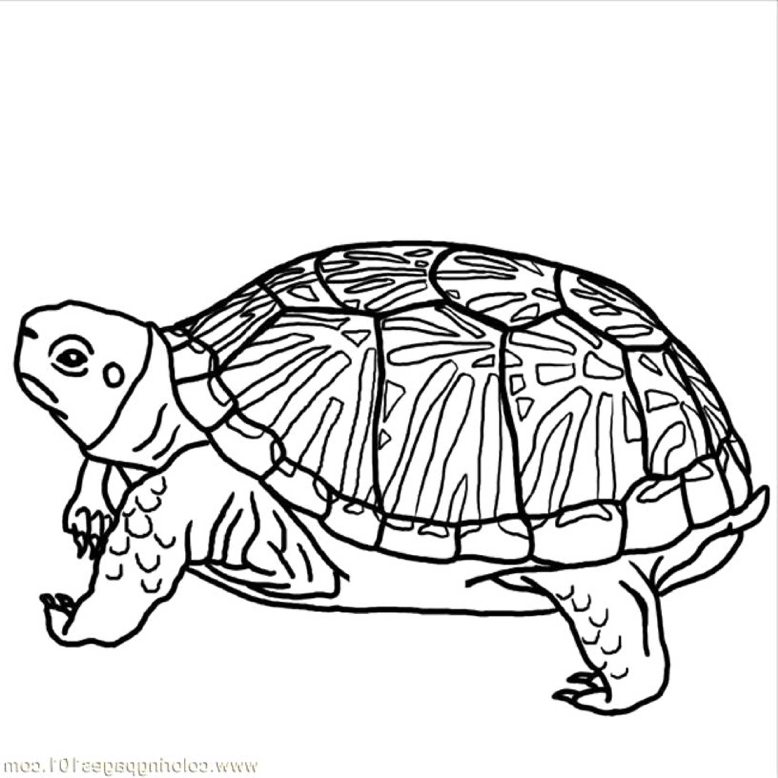 hard turtle coloring pages printable