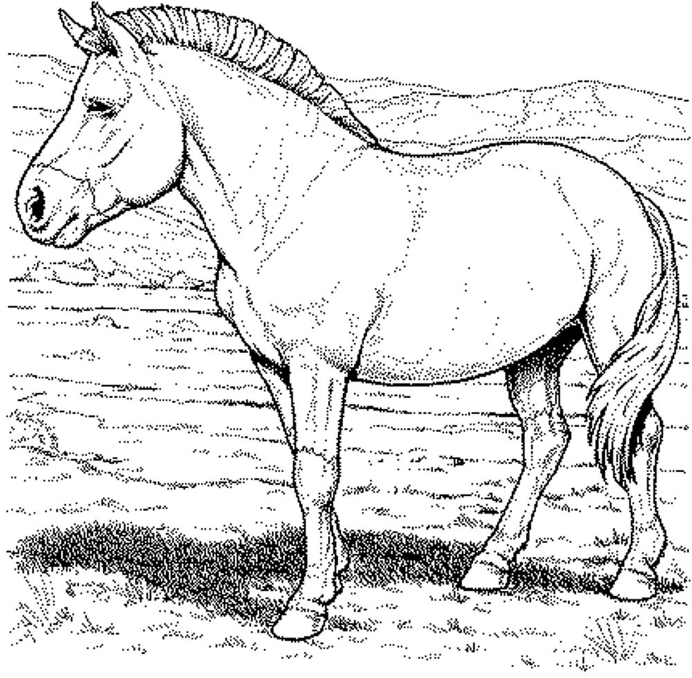 Paarden Kleurplaten Fjord.Fun Horse Coloring Pages For Your Kids Printable