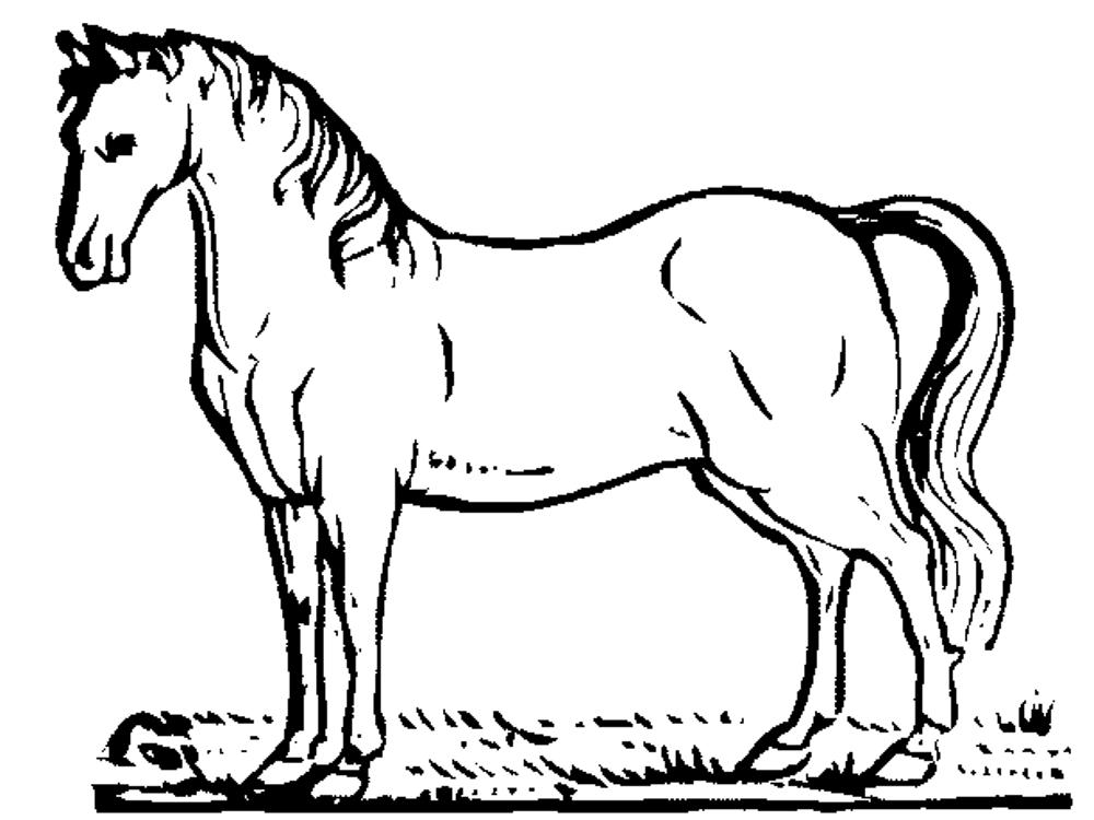 Horse coloring pages printable for Coloring pages horses printable