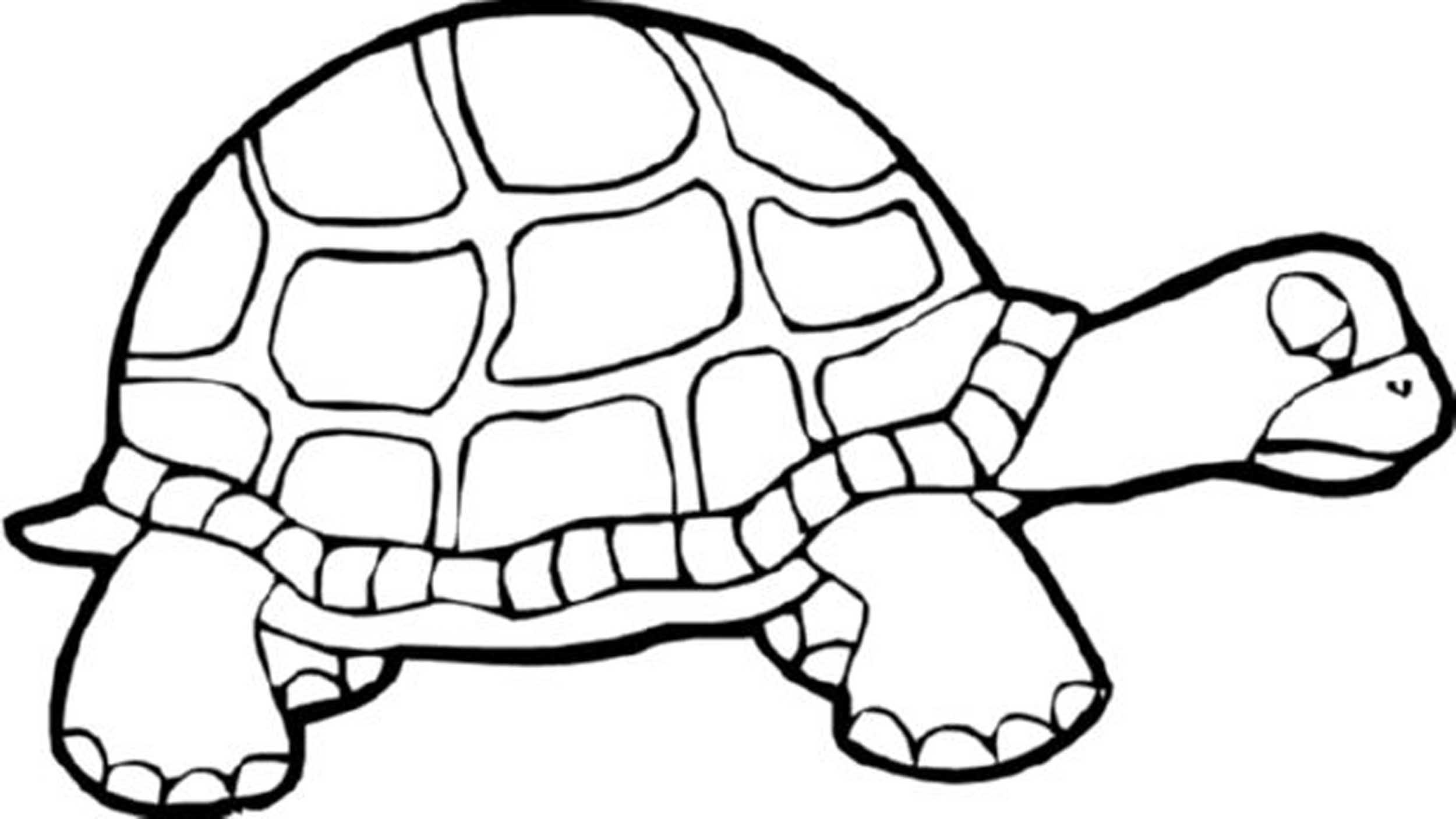 old turtle coloring pages to print
