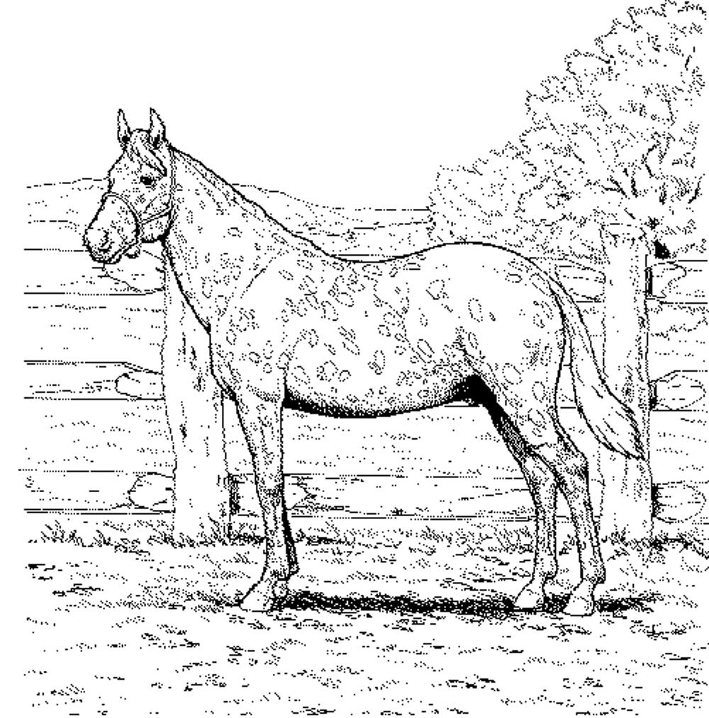 shop related products - Horses Printable Coloring Pages