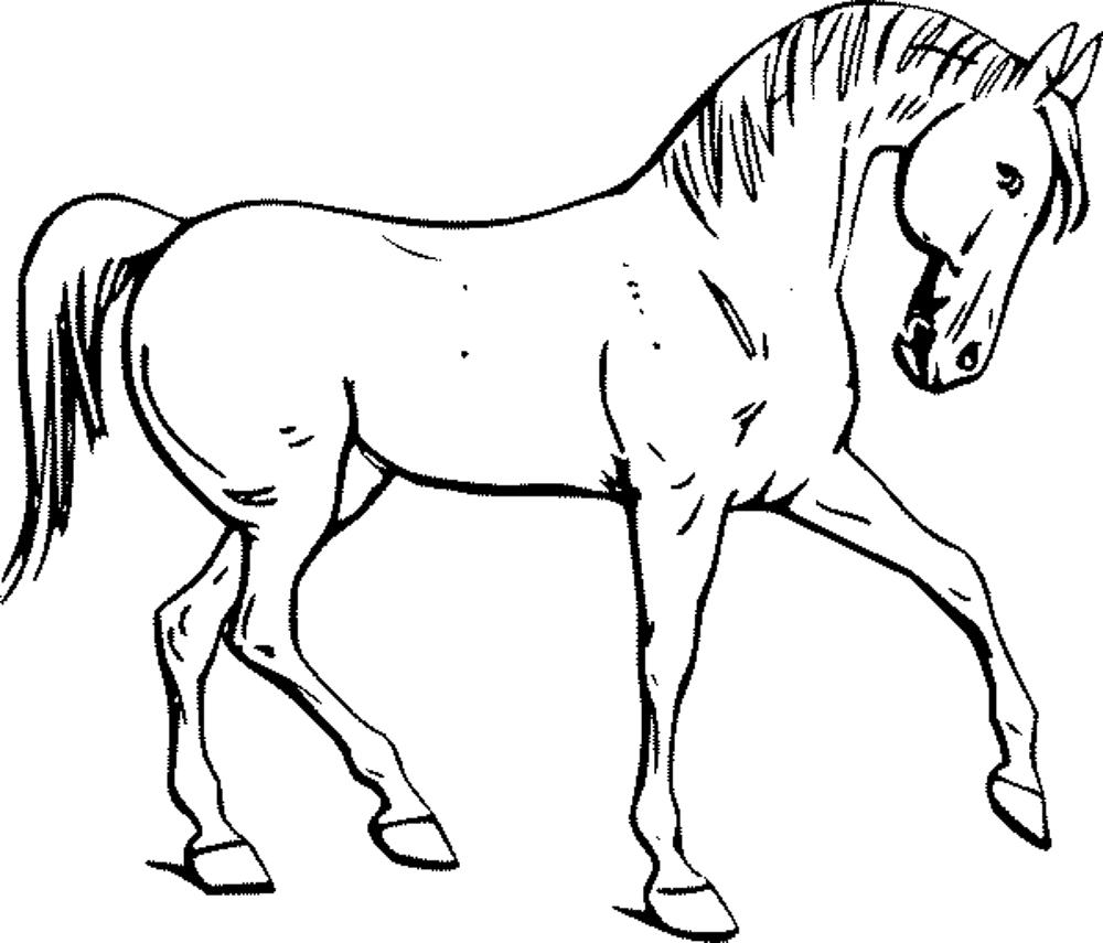 printable horse coloring pages - Horse Coloring Pages For Kids