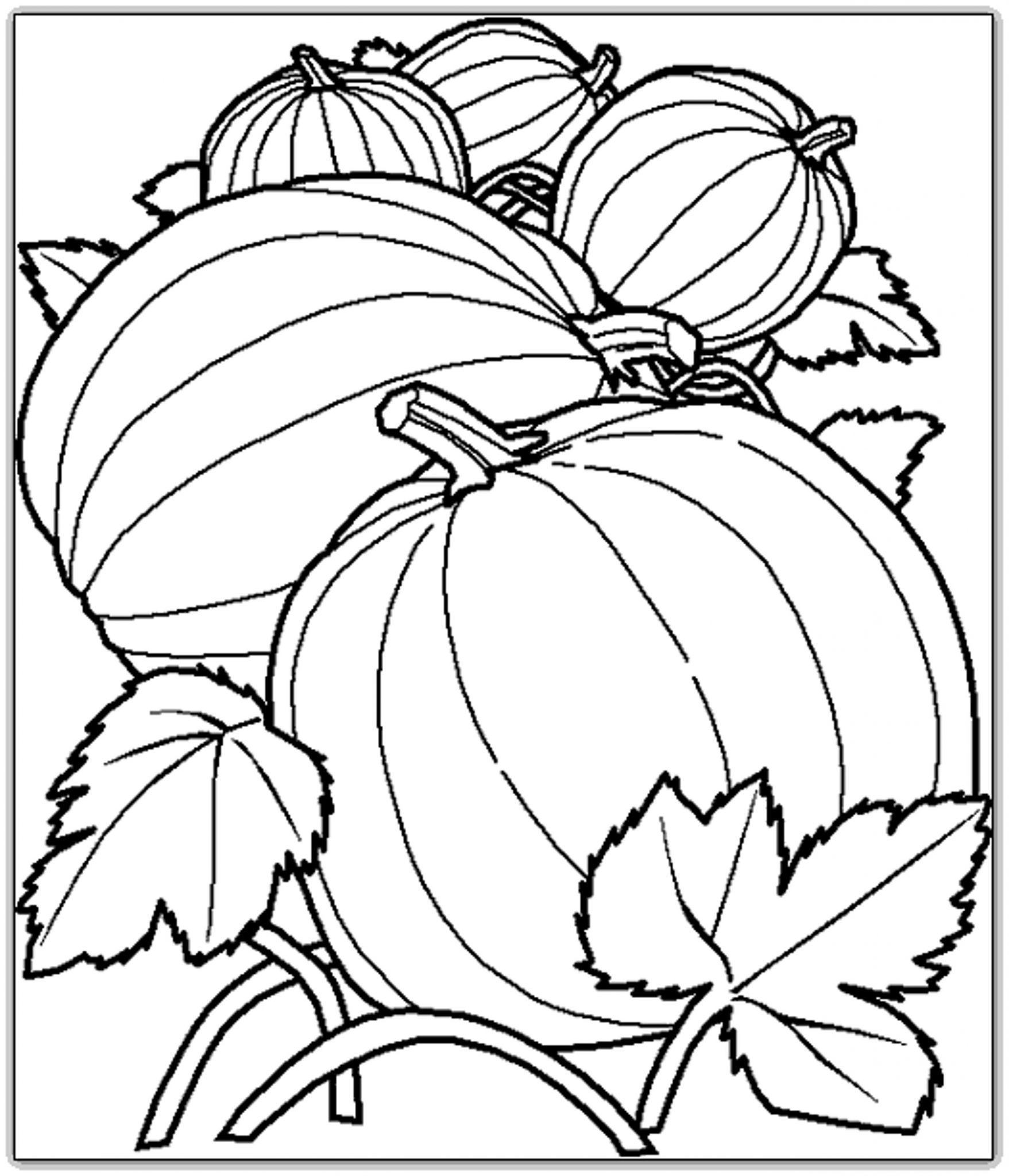 Printable pumpkin coloring pages harvest for Coloring pages pumpkin free