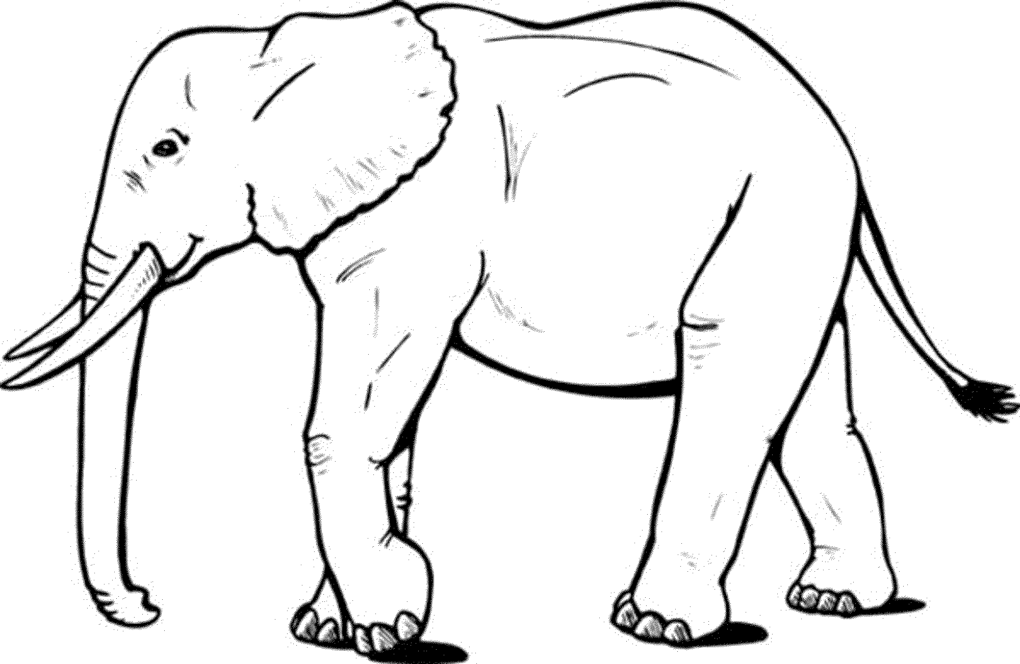 Elephants - Free printable Coloring pages for kids | 1303x2000