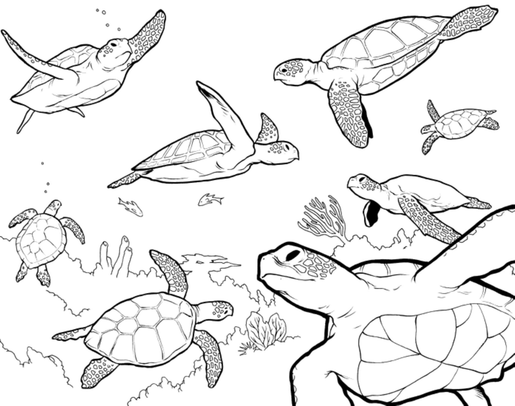 gallery of turtle coloring pages as the educational tool