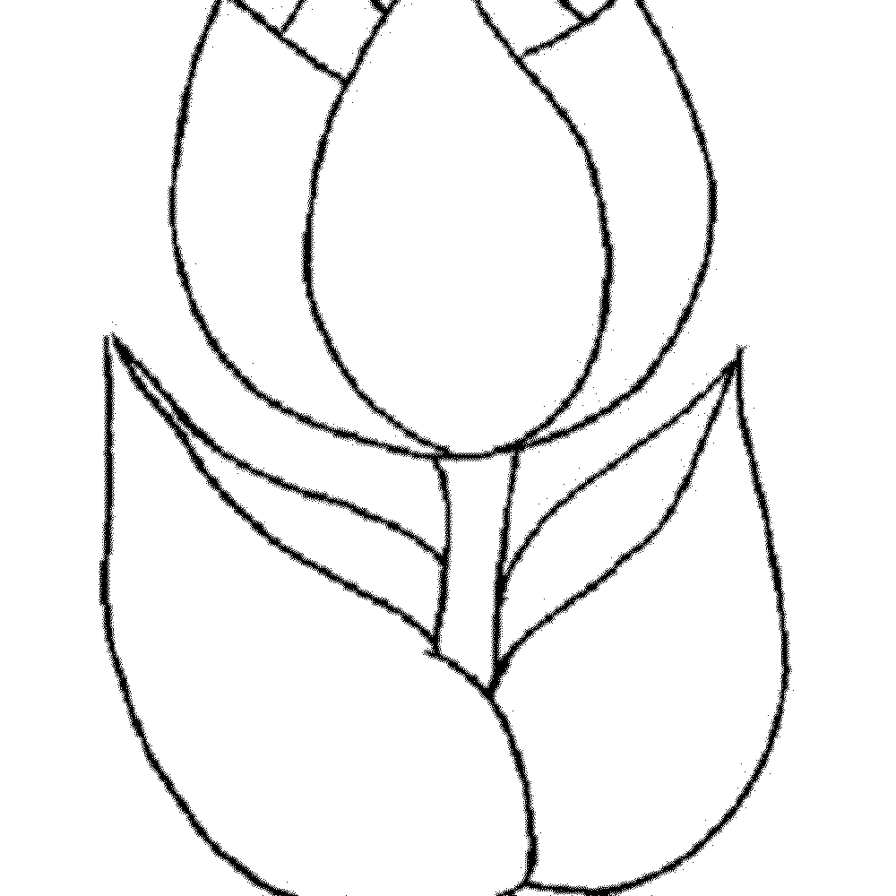 Marvelous Spring Flower Coloring Pages